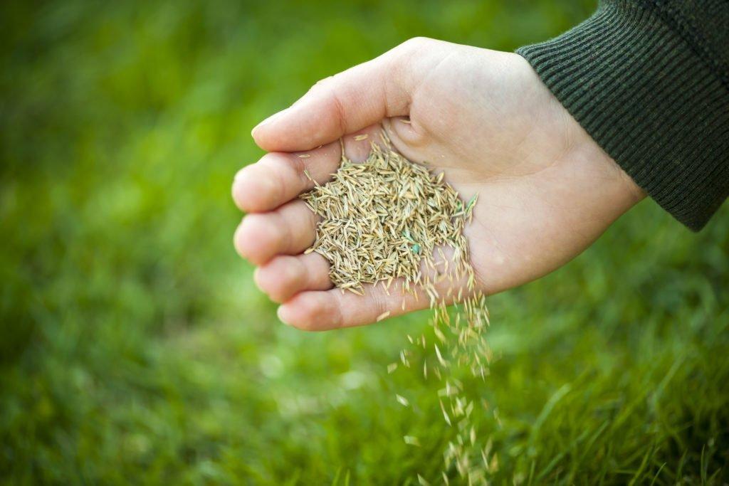 grass seed waterdown